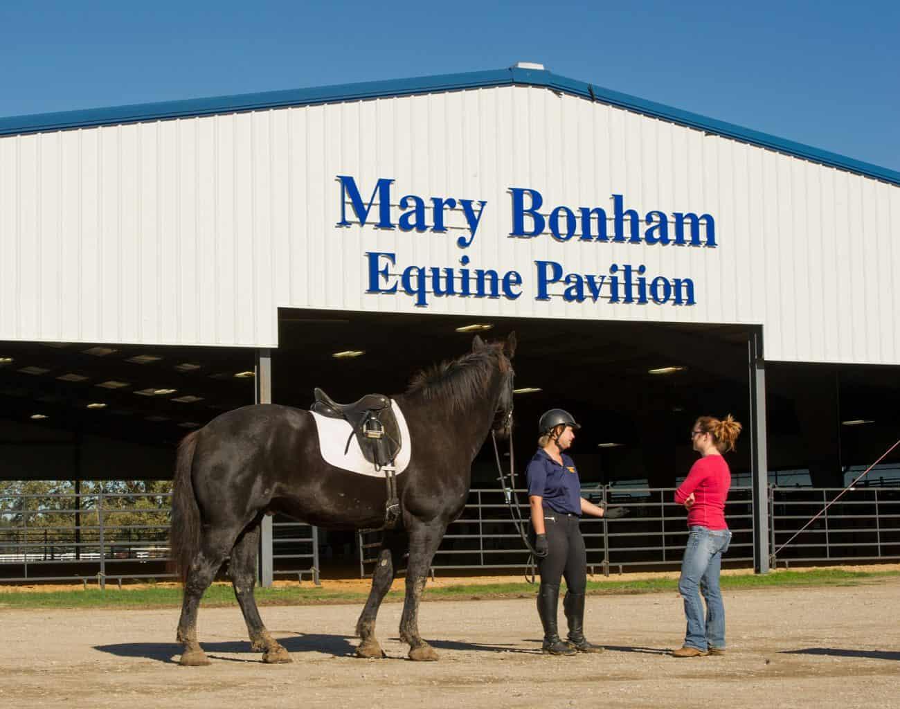 Student holding horse outside Mary Bonham Equine Pavilion