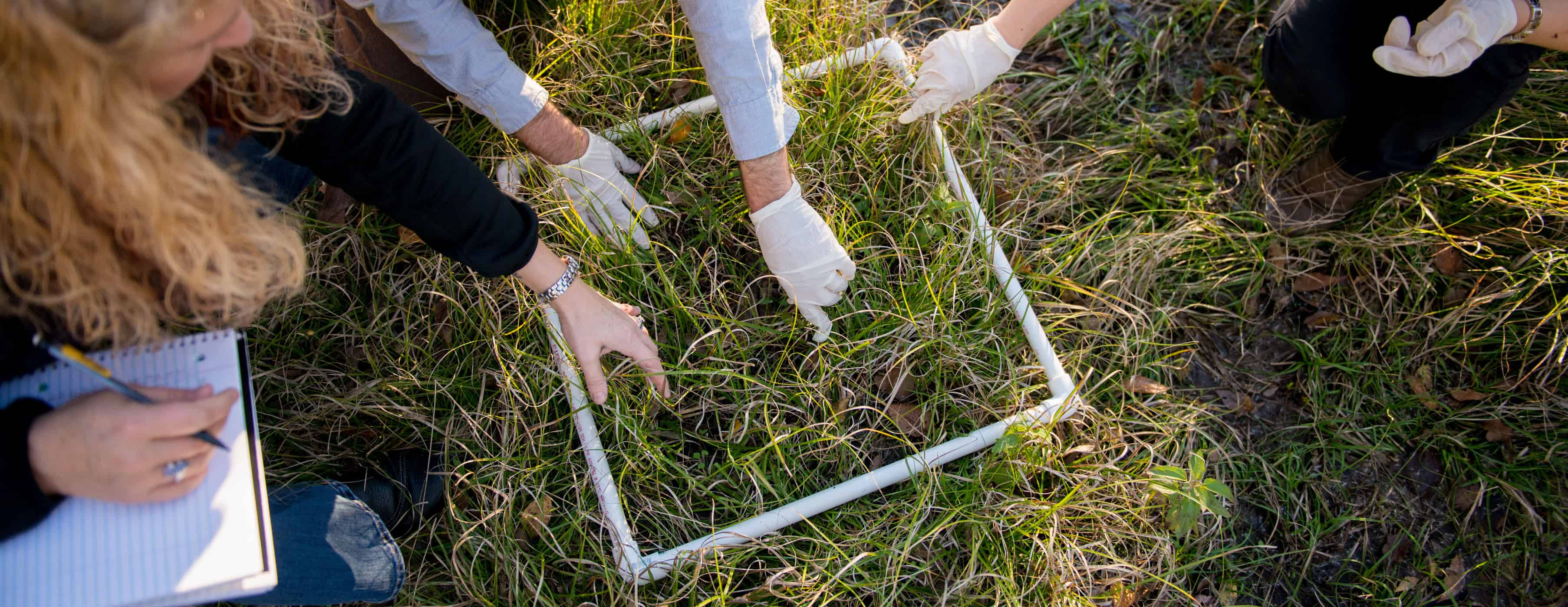 Students taking sample of grass
