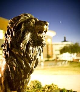 TAMUC lion statue on campus.