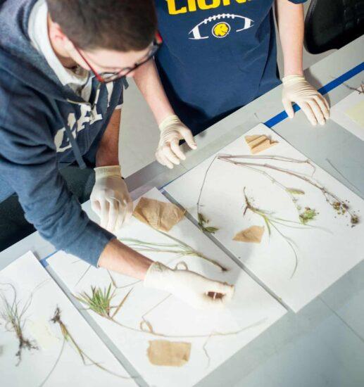 Environmental science students examining plants