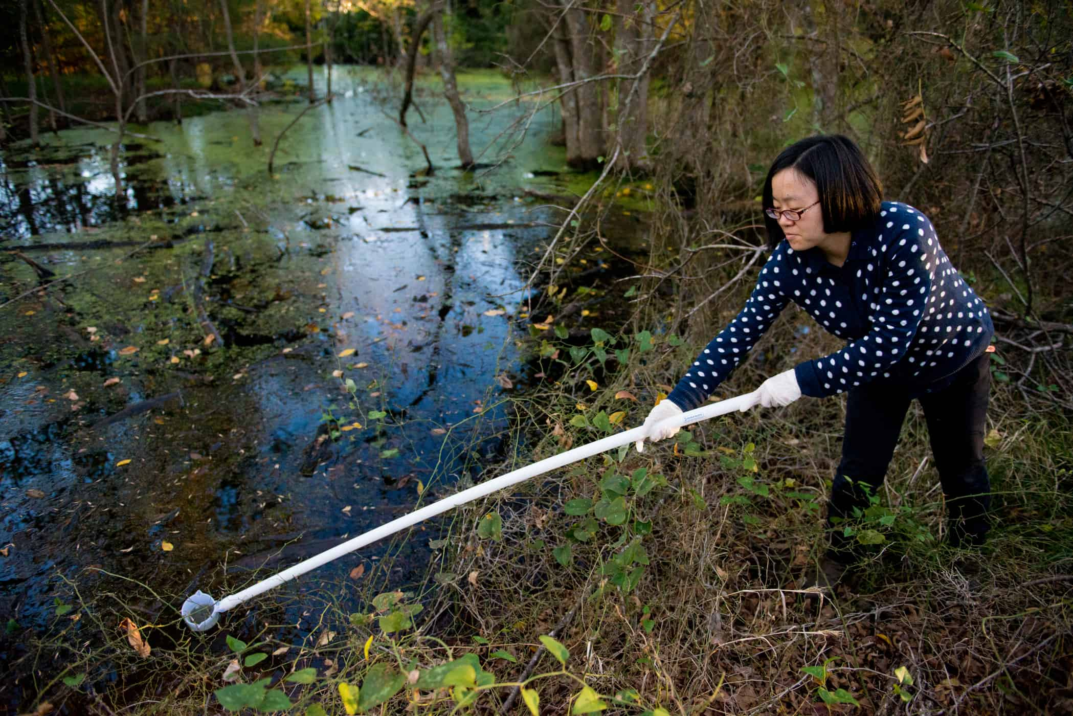 Environmental scientist taking sample of water