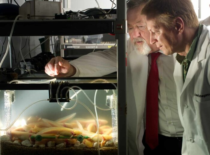 Biological scientists observing animals