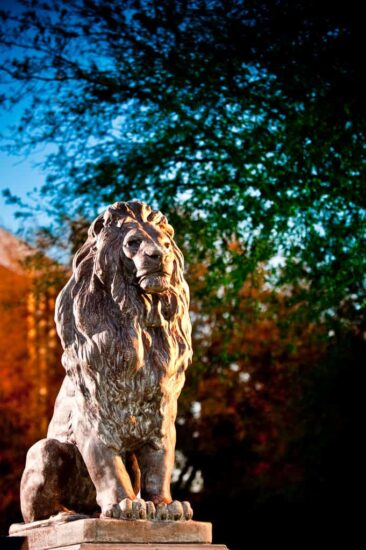 Lion Statue 3