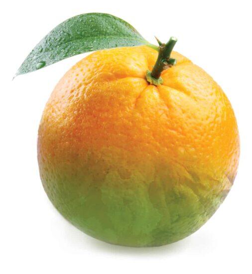 |Dr. Jose A. Lopez|Saving Citrus: Dr. Jose Lopez