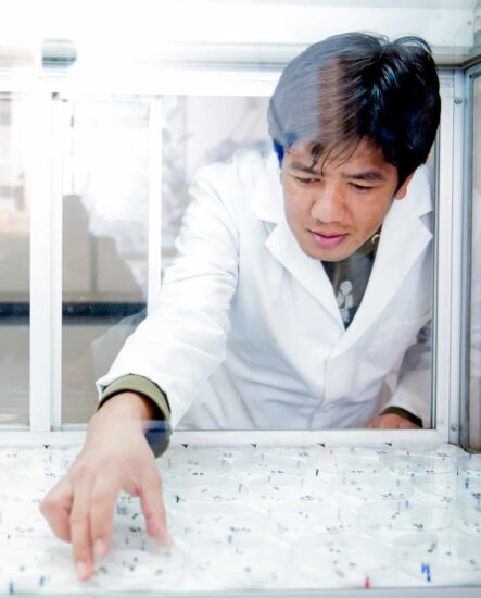 Chemist selecting an interesting petri dish among many