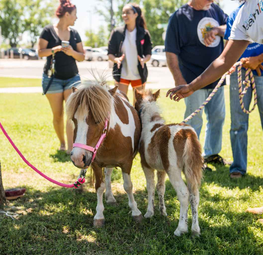 two ponies interacting with each others and a group of students.