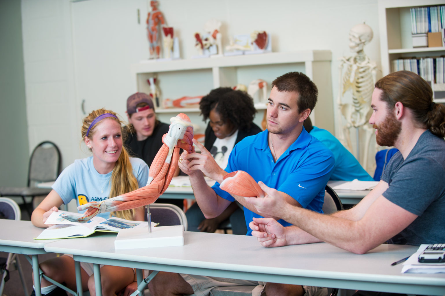Students inspecting a skeleton with muscle structure