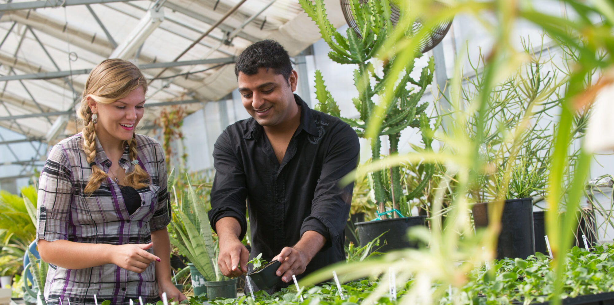 Female and male student working with plants in greenhouse.