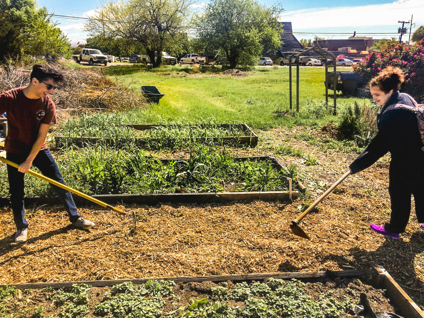 Two students gaining hands-on experience working in a vegetable garden.