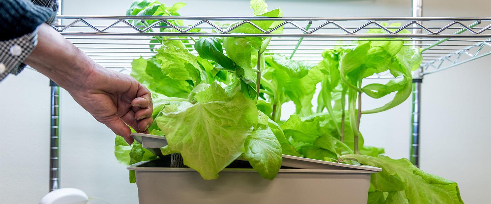 Plant on a shelves.